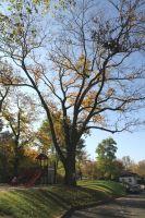 Fotografie z knihy - Strom u krčského zámku